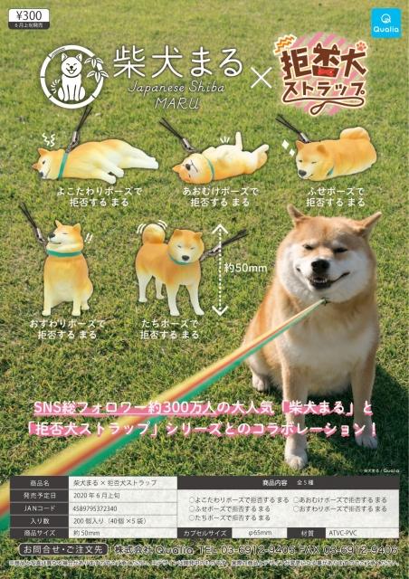 柴犬 まる
